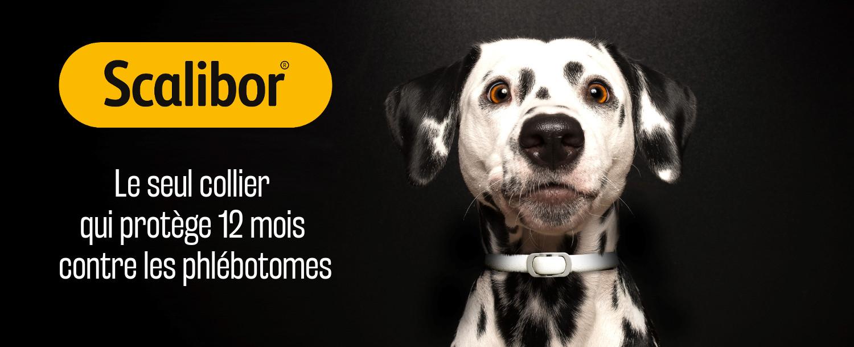 Scalibor : la protection contr eles phlébotomes.