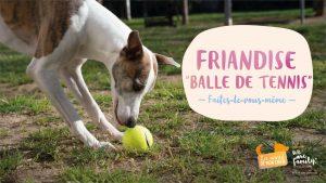 DIY Balle de tennis pour chien